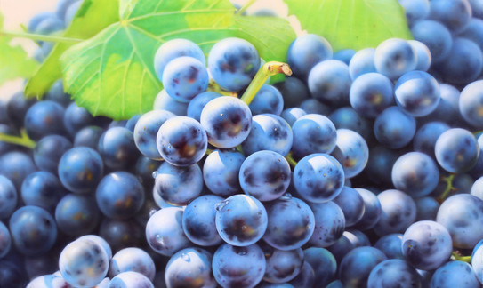 GrapesGrapes