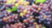 Grapes 2015 oil on canvas 100x55cm  .jpg