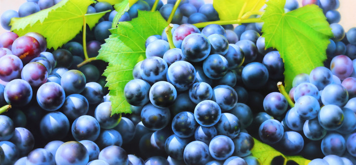 Grapes 140x65 oil on canvas 2020