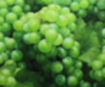 Grapes 60.6x50cm oil on canvas 2017.jpg