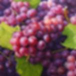 Grapes 65x65cm oil oncanvas 2011 kim dae