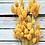 Thumbnail: Phalaris verschiedene Farben