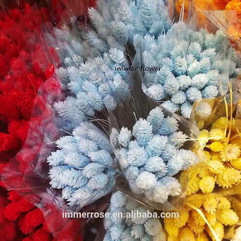 Phalaris verschiedene Farben