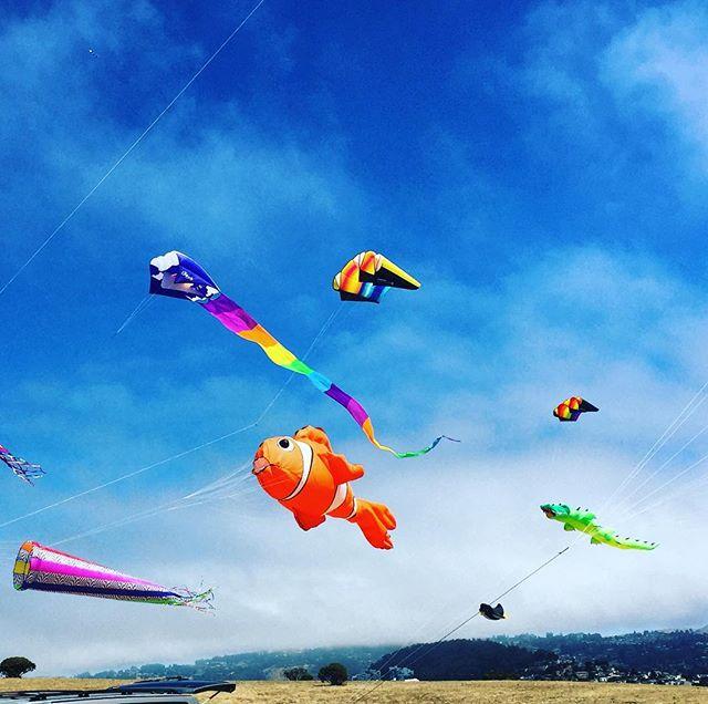 Big kites, little kites, lizard kites, Nemo kites all flying high!!! #KiteFestival #BerkeleyMarina #BayExplorers #YayArea #PlayAllDay #Forev