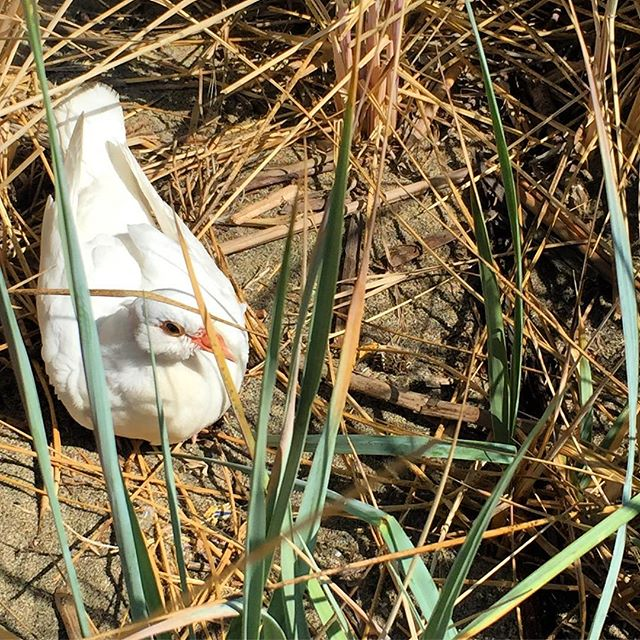 We spotted this little friend hiding in the bushes as we were scavenging for trash...Saturday was California's Coastal Clean Up Day