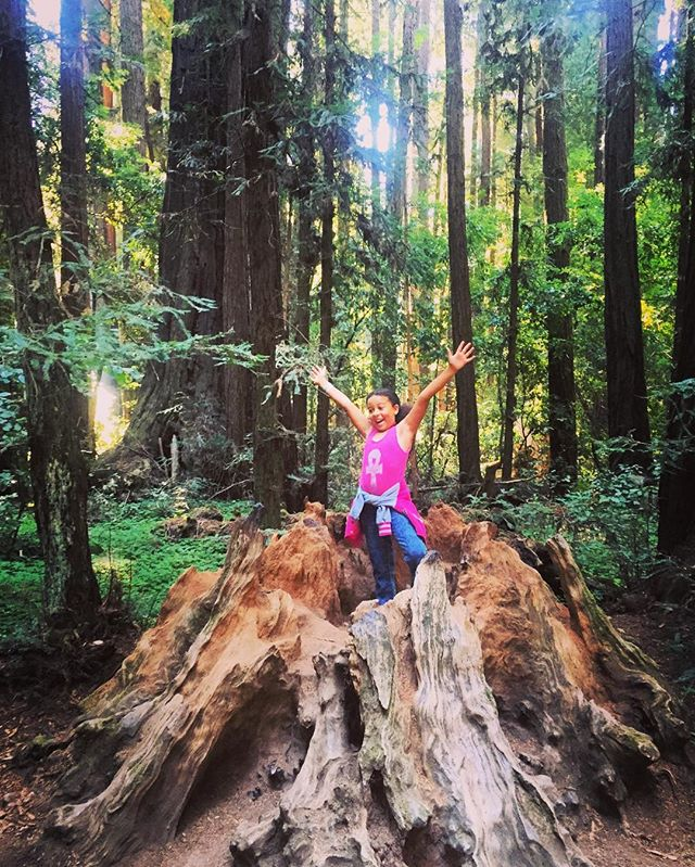 Nature is so amazing! Bay Explorer_ 10 Things To Do Under $10...#10 take a road trip to Henry Cowell Redwoods in Santa Cruz