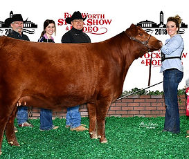 Cinco R Ranch Offering Registered Red Angus Heifers, Bulls, Cows For Sale in Texas