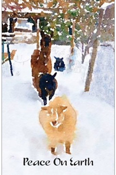 Cordial & Friends Christmas Card Set of5