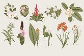 植物イラストレーター