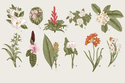 Botanic Illustrations