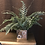 Thumbnail: Fern in Metallic Vase