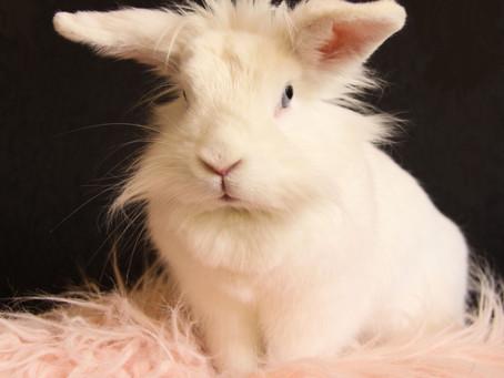 Het fotograferen van konijnen.