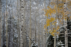 Fall Snow In Upper Red River Valley