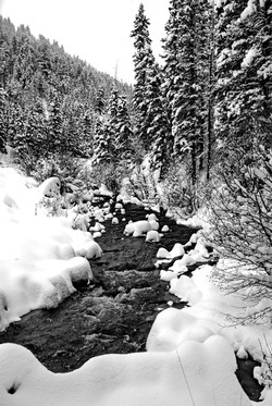 Winter Stream In Upper Red River Valley.