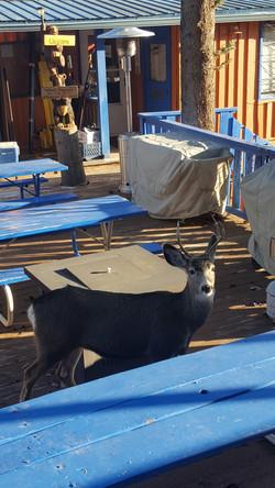 The Neighborhood wildlife at Terrace Tow