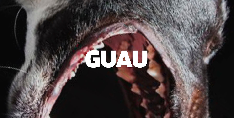 Guau | Moombahton (Premium)