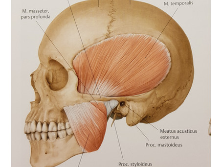 Purentaelimistön vaivat ja osteopatia
