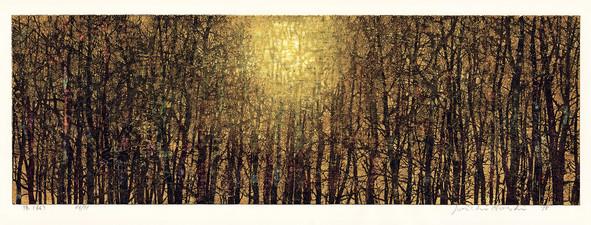 Sun Light (Forest)