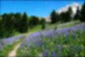 Paradise park 4 Ethan Douglass.jpg