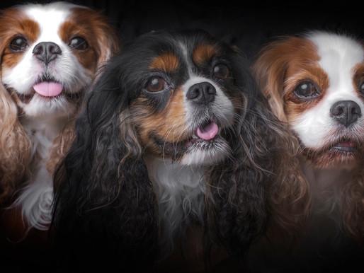 Pet and Family Portrait  - Hong Kong