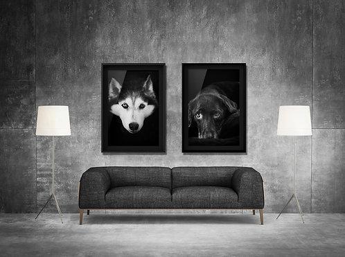 FINE ART PET PHOTOGRAPHY PET PORTRAIT SESSION - Museum Wrap Canvas x 1