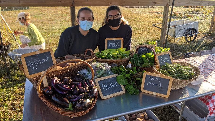Farm stand eggplant.jpg