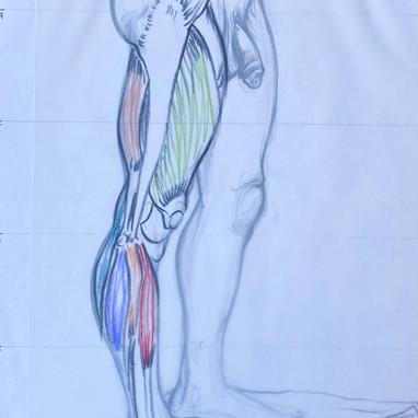 Side of Leg Muscle