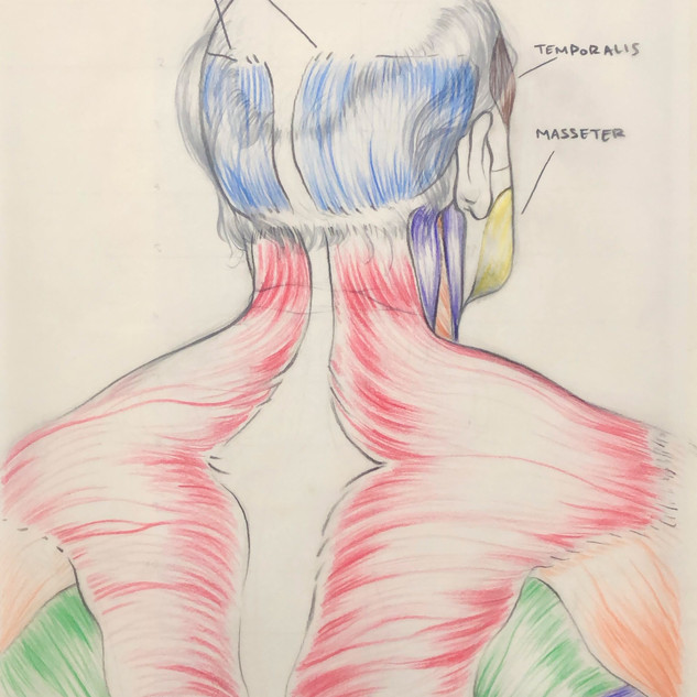 Back of Head