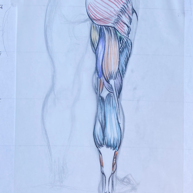 Back of Leg Muscle