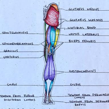Labeling of Leg