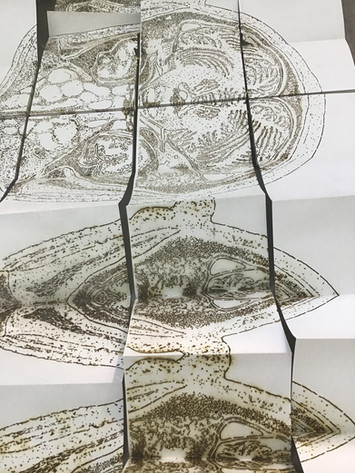 "Andrew Carnie, ""Opening Up"", 2019, 8 x A5 laser cut concertinaed paper, ink, dimensions variable"