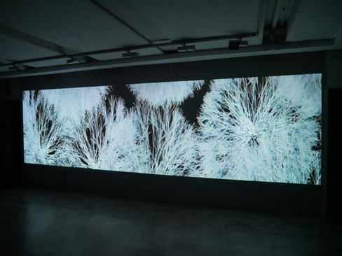 Andrew Carnie, 'As Things Come to Pass (Winter Tree)', 2019, still from 2 channel HD video, 2 projectors, 6m x 2.5m x 5m, continuous loop