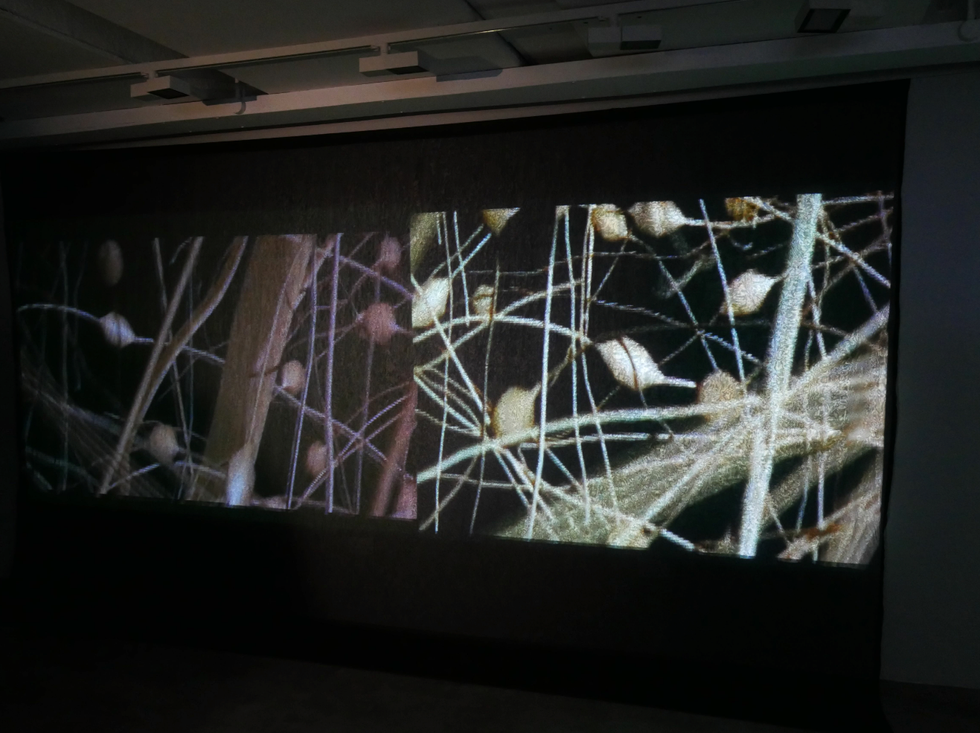 Andrew Carnie, Winter Tree Seminar, Installation view, multi media, size variable, 2015