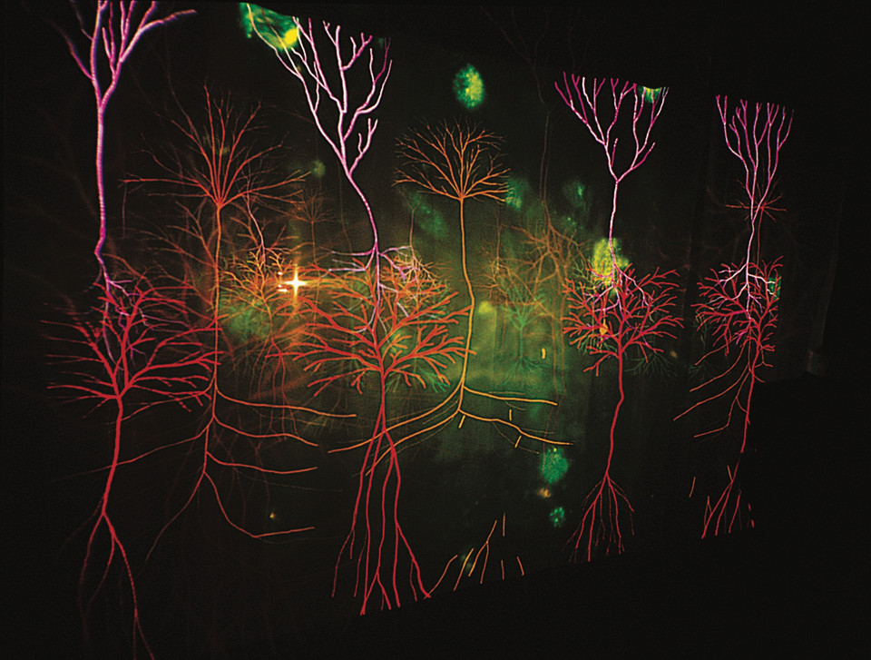 Andrew Carnie, Magic Forest, 2002, slide disolve work, size variable