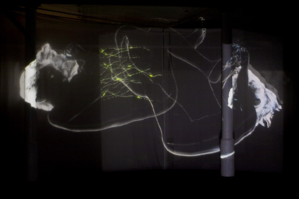 Andrew Carnie, Complex Brain: Spreading Arbour, 2004, 2 x video channels, voile screen, installation, size variable