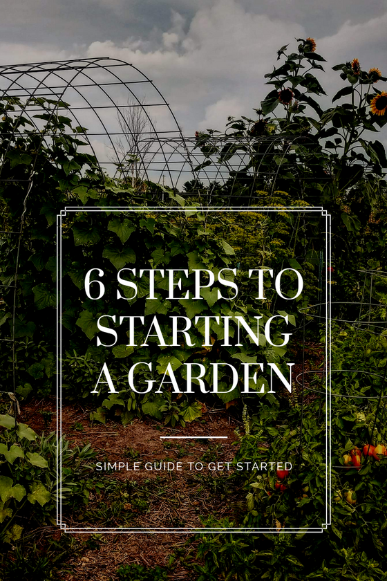 6 Steps to Starting A Garden