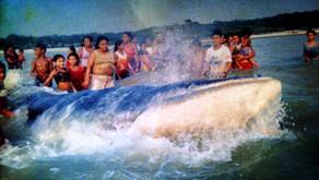 Livro descreve a presença de uma baleia no rio Tapajós e vivência de ribeirinhos