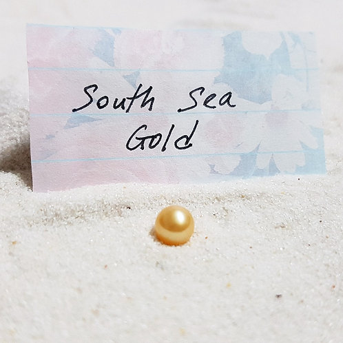 South Sea Gold Pearl Oyster