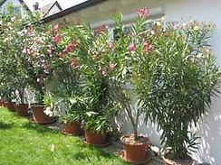 Garten.8.03_003_Kopie.jpg
