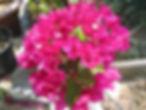 Garten.8.03_016_Kopie.jpg
