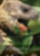 Futterpflanzen