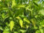 gruene Mandarienen.jpg