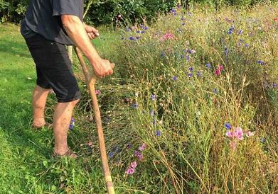 Naturbeskyttelse. Landsbyen Rudmes mænd tager sammen ud og plejer naturarealer med le