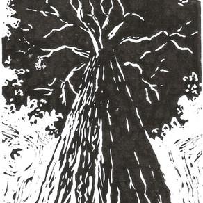 Project Oak.......