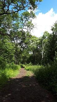 Knepp path.jpg