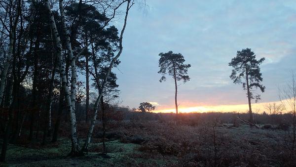 Woodland early light 2.jpg