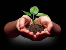 What Are You Planting?