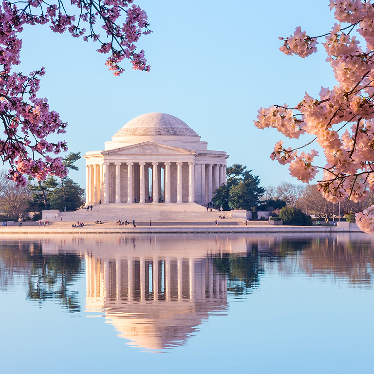 Washington DC: Cherry Blossoms and the Blues