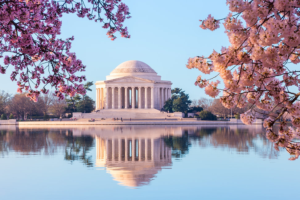 Washington DC Cherry Blossoms.jpg