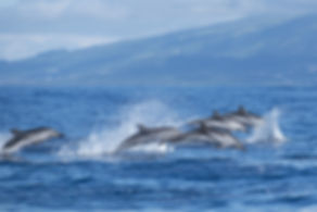 dophins.jpg